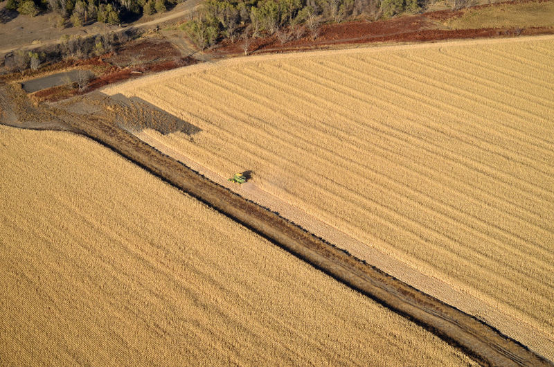 Landscape Land Agriculture Rural Scene Field Environment Farm Cereal Plant Agricultural Machinery Crop  Harvesting High Angle View Combine Harvester Aerial View Aerial Aerial Photography Aerial Shot Corn Cornfield Harvest Ethanol Diagonal Rows Food Energy
