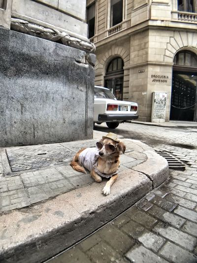 Dog on street in city