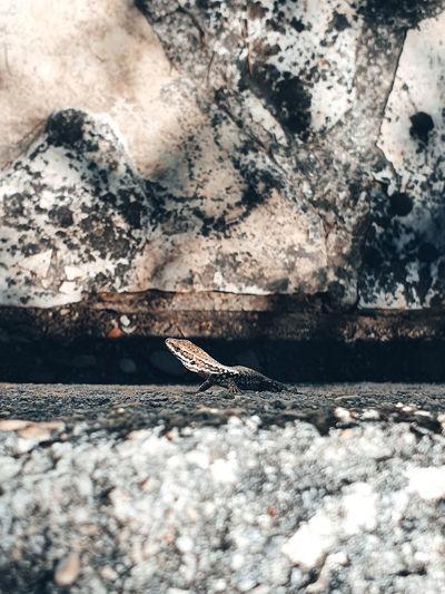 Close-up of dry leaf on rock