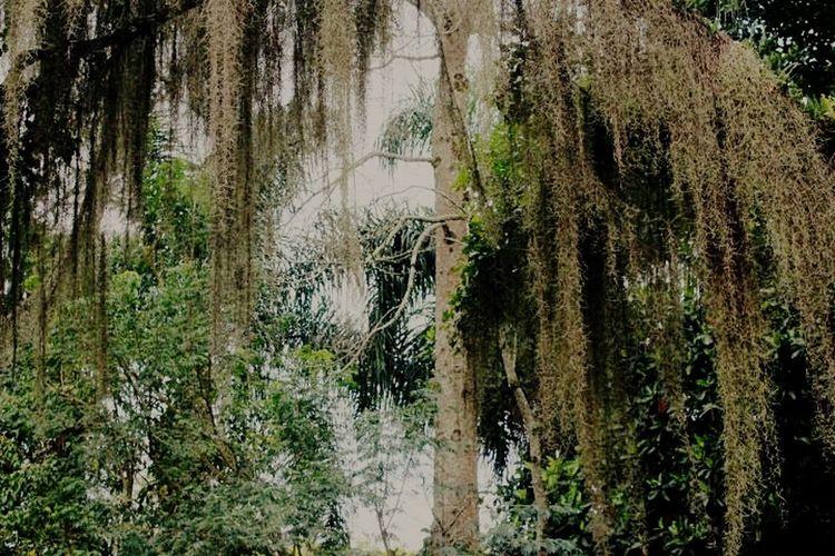 Bosque, Parque