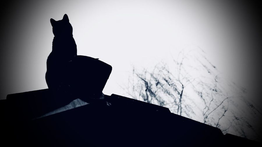 Animal Animal Themes Black Cat On Roof Cat Day Domestic Domestic Animals Domestic Cat Feline Low Angle View Mammal Nature No People One Animal Outdoors Pets Silhouette Sky Vertebrate Vignette