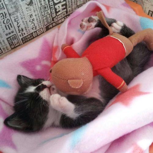 おはぎさん Cat Lovers