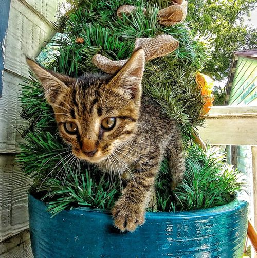 Portrait of cat in potted plant