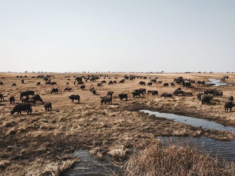 Namibia Kasane Animals Grazing Grassy Landscape Plain Horizon Over Land Nature Beauty In Nature Sky Day Lost In The Landscape Perspectives On Nature Perspectives On Nature