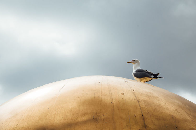 Cloud Gold Travel Animal Themes Animal Wildlife Bird Nature One Animal Outdoors Perching Seagull Shapes And Forms Sky Travel Destinations