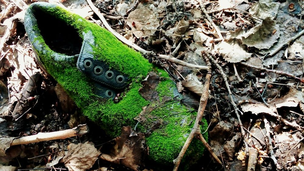 Shaggy Boots Moss Urban Forest Nature Wins Where A Man? Walking Around Green Color Colour Of Life Colors Of Sankt-Peterburg Sankt-peterburg Russia Adapted To The City