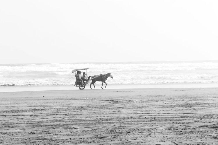 Sea Beach Sand Horse Riding Horizon Over Water Transportation Domestic Animals Horseback Riding Horse Cart Sky Outdoors Nature Adult Day Full Length Adults Only Men Mammal People Black & White Blackandwhite Yogyakarta,indonesia Yogyakarta Story Beach Photography
