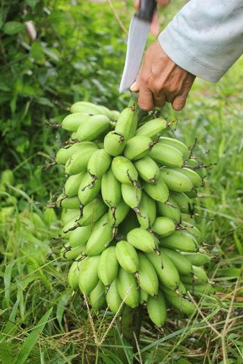 Full frame shot of hand holding fruit on field