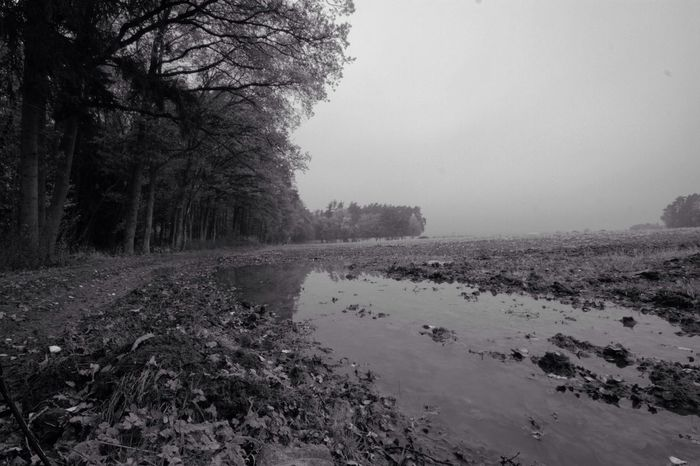 Fog Spooky Black And White Darkness