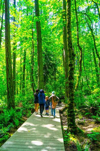 Boardwalk Bonding Forestwalk Hiking Leisure Activity Lifestyles Nature Togetherness Tree Trunk Trees Walking • The Great Outdoors – 2016 EyeEm Awards