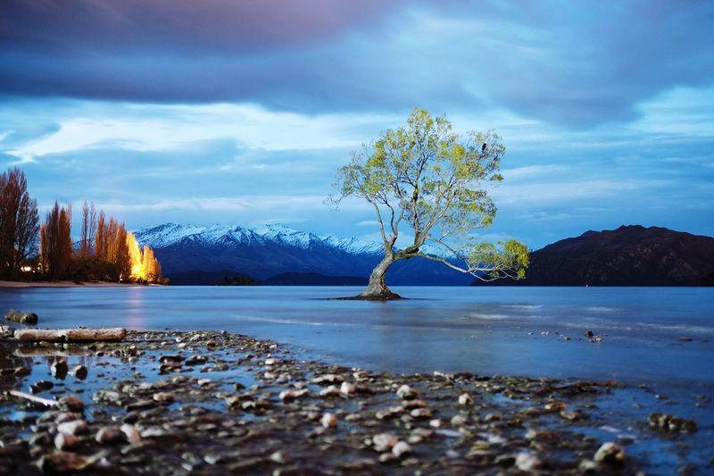 That Wanaka Tree, Wanaka, New Zealand Tranquility Water Mountain Lake Beauty In Nature Tree Scenics Tranquil Scene Nature Cloud Mountain Range Non-urban Scene Idyllic Shore Peace First Eyeem Photo