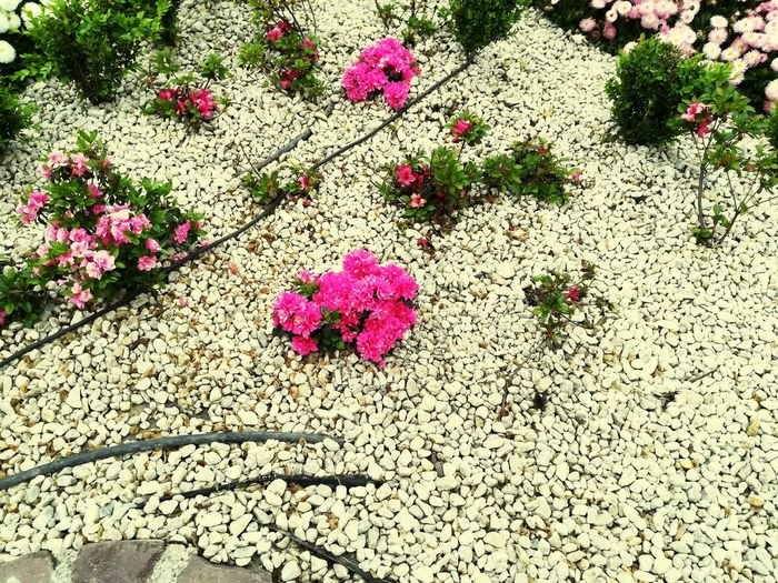 Flower High Angle View Outdoors Day Nature No People Plant Beauty In Nature Growth Flower Head Fragility