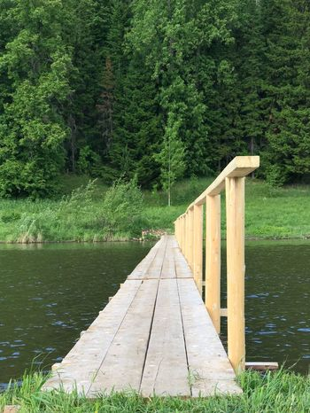 Plant Green Color Tree Growth Water Wood - Material Nature Direction Lake Tranquility Footpath Connection Bridge