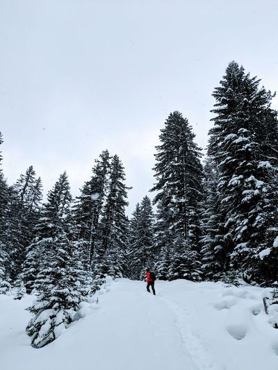 Winter Snow Cold Temperature Tree Beauty In Nature Real People One Person Leisure Activity Scenics - Nature Sky Land Plant Nature Lifestyles Covering White Color Sport Adventure Day Warm Clothing Extreme Weather Snowcapped Mountain