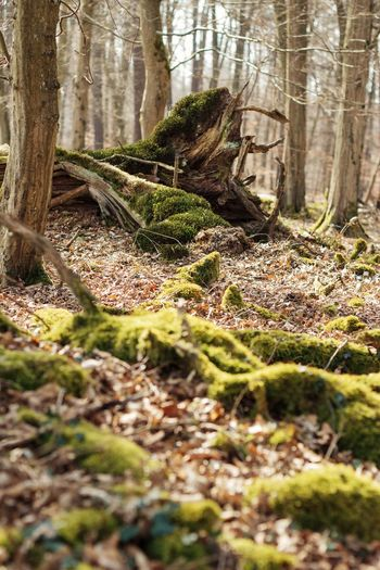Moss growing on tree trunk in forest