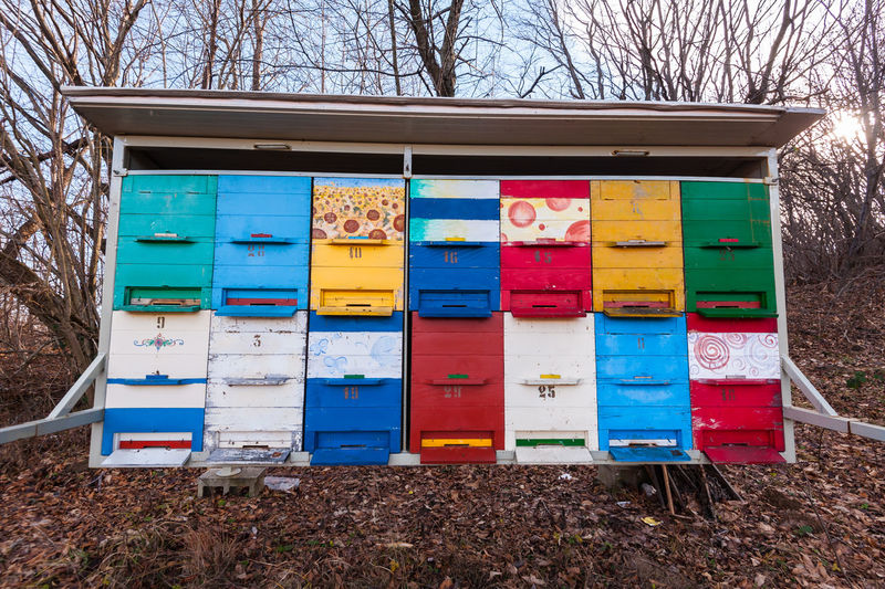 Hives of bees in the apiary. Multi Colored No People Nature Day Land Tree Container Box Field Plant Bare Tree Box - Container Outdoors Wood - Material Side By Side Choice Variation Collection Beehive Bee