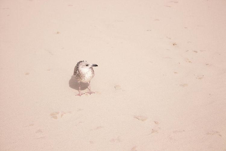 High angle view of bird on land