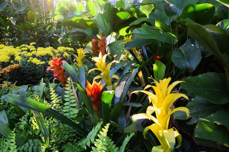 Vibrant tropical flower bush. Flower Flower Head Leaf Close-up Plant Green Color Botanical Garden