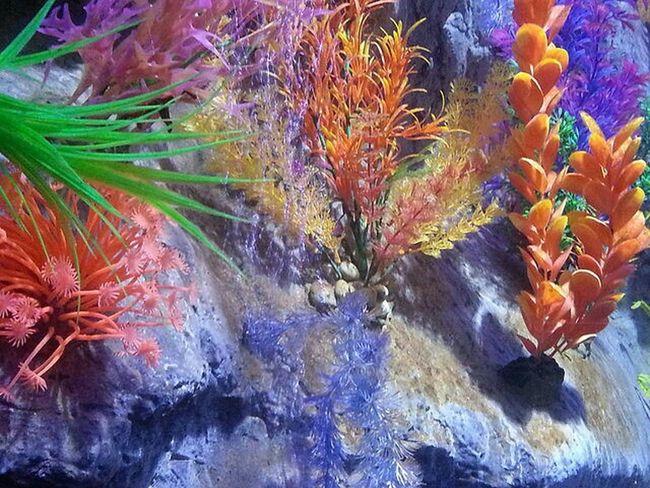 Vibrancy Colours Vibrant Aquarium Anenome Lovephotography  Eye4photography  EyeEm Nature Lover