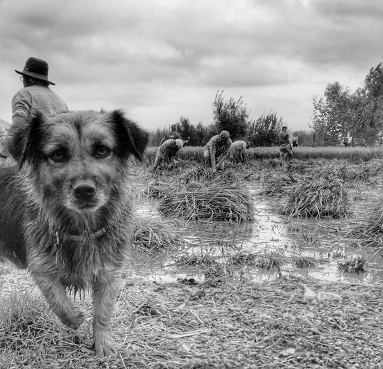 Iphonephotography Blackandwhitephotography Espagne Working Working Hard Dog