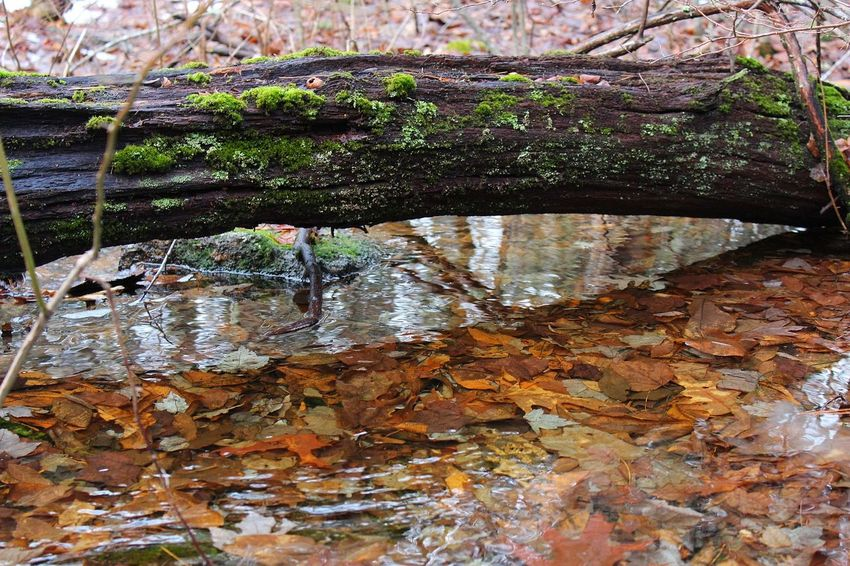 Log over the Creek Water Nature Tree Nature Tree Winter Forest Canon 1300d Beauty In Nature River Stream Icy River Moss Mossy Logs Log Tree Over Water Outdoors The Great Outdoors - 2017 EyeEm Awards Perspectives On Nature