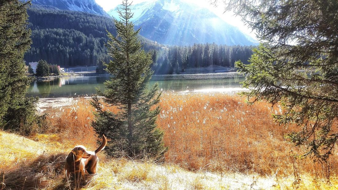 Autumn Taking Photos Lake View Enjoying Life Dogstagram Dog Heidsee Lenzerheide Hanging Out Eye4photography  Taking Photos