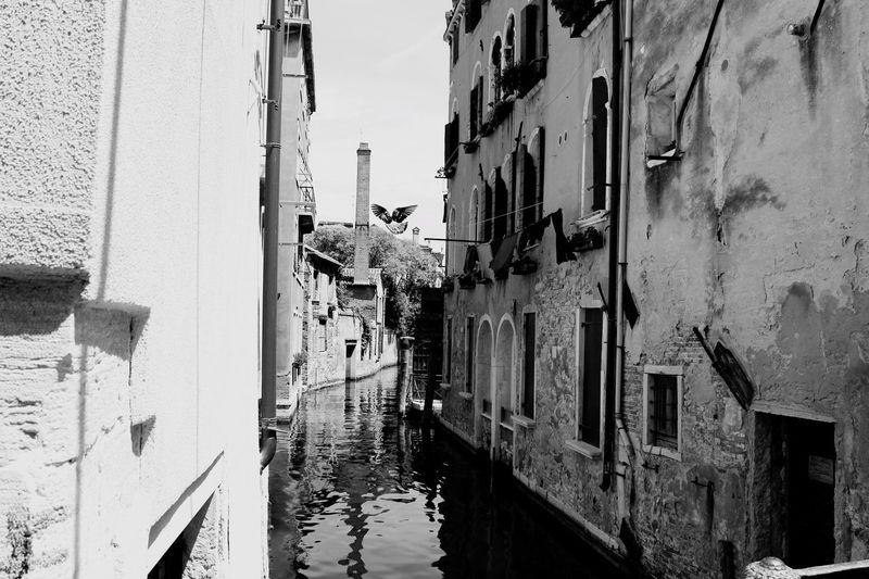 Venice Bird