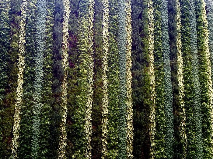Pivotal Ideas Abstract Geometry Building Perspectiva Perspective Abstracto Texture Textura Green Verde Geometrico Geometric Greenwall Grasswall