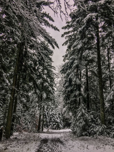 Beauty In Nature Black Forest Cold Temperature Day Forest Germany Landscape Nature No People Outdoors Scenics Sky Snow Trail Tranquility Tree Winter