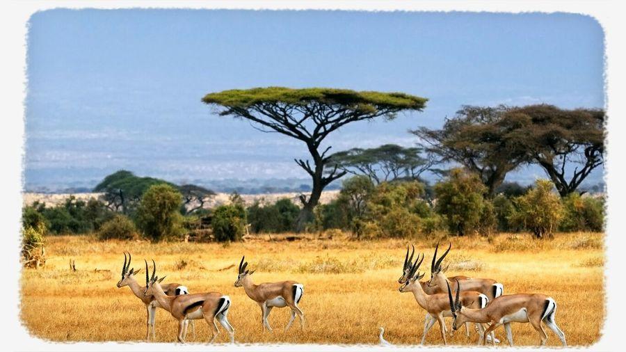 Cameroun Nature Savane c'est pas un beau paysage sa ?