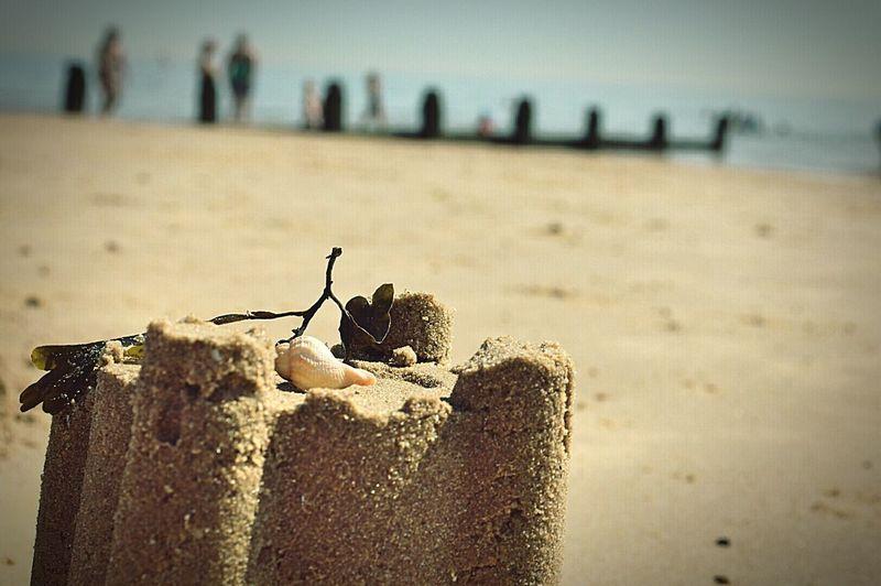 Sandcastle Seashell Seaweed On The Beach At The Beach Sand Sandy Beach By The Sea Seaside British Seaside Frinton-on-Sea United Kingdom Nikon D3200