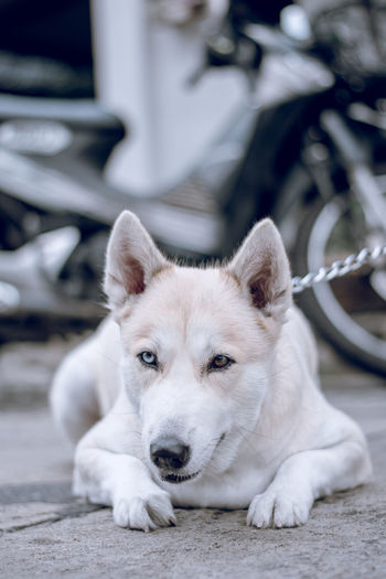 cool Close-up Day Dog Domestic Animals Focus On Foreground Looking At Camera One Animal Pets