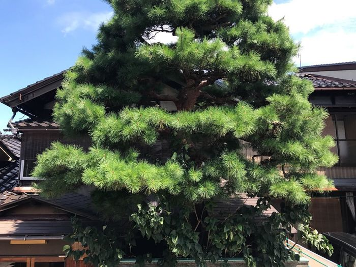 Tree House Green Color Nature Architecture Japan Photography Travel Photography Traveling Day Beauty In Nature