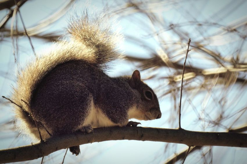 Little Animal Animal Photography Animals Squirrel Closeup Animal_collection Squirrel! EyeEm Animal Lover Animal Squirrel Squirrels