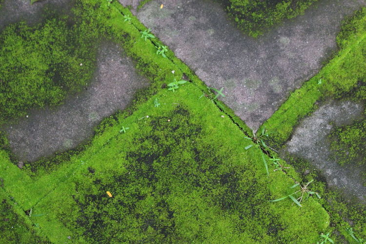 High angle view of moss growing on land