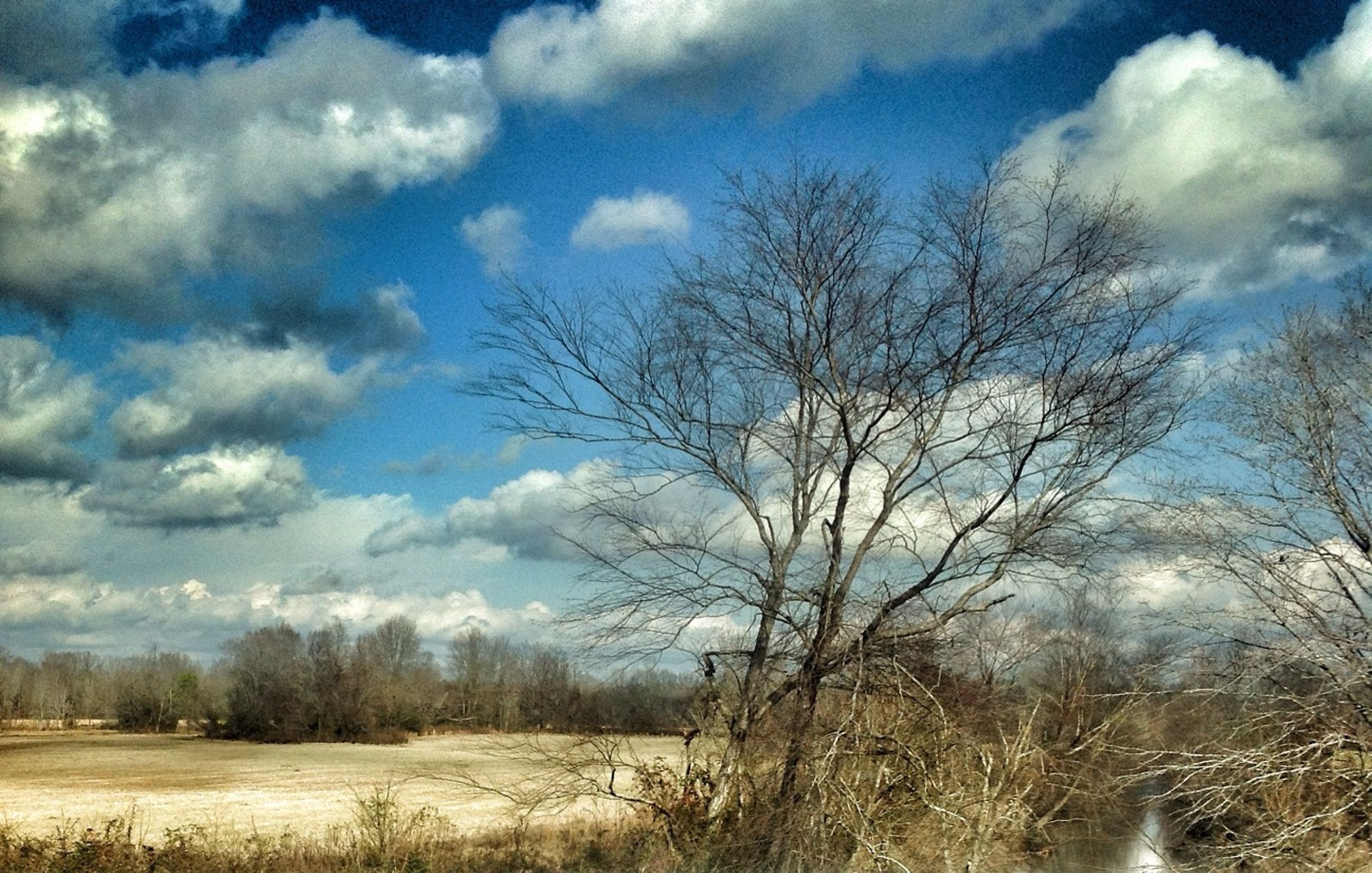 sky, tree, bare tree, tranquility, cloud - sky, tranquil scene, field, landscape, nature, scenics, cloud, beauty in nature, grass, cloudy, growth, branch, non-urban scene, day, outdoors, remote
