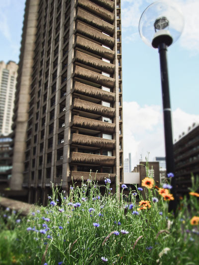 Concrete + jungle City Street Home London Micro Four Thirds Architecture Barbican Blooming British Architecture Building Exterior Buildings Built Structure Day Flower Nature No People Outdoors