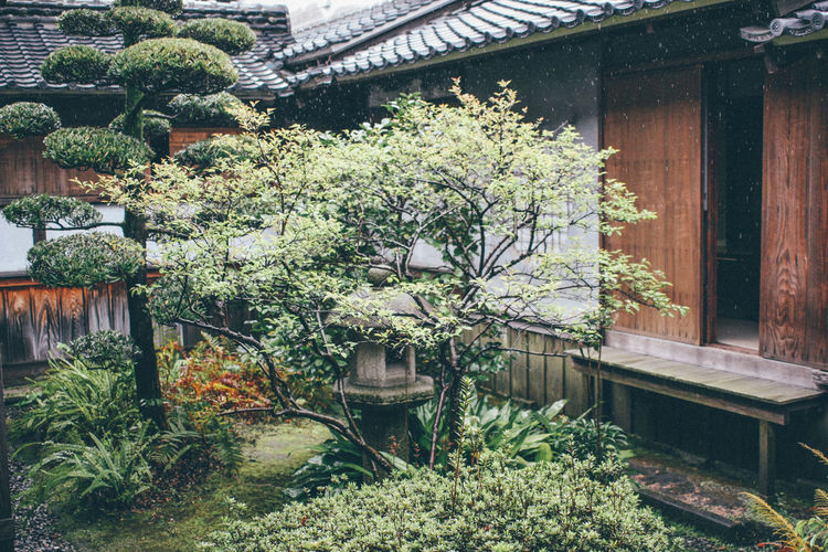 Abandoned Branch Building Exterior Day Exterior Front Or Back Yard Garden Green Green Color Growing Growth House Japan Japanese Culture Leading Leaf Narrow No People Outdoors Plant Potted Plant Rainy Days Tree Tropical Climate