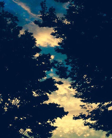 昨日の黄昏 EyeEmBestPics Night Photography Sky_ Collection Skylovers Light And Shadow EyeEm Nature Lover EyeEmbestshots Twilight Sky EyeEm Best Shots
