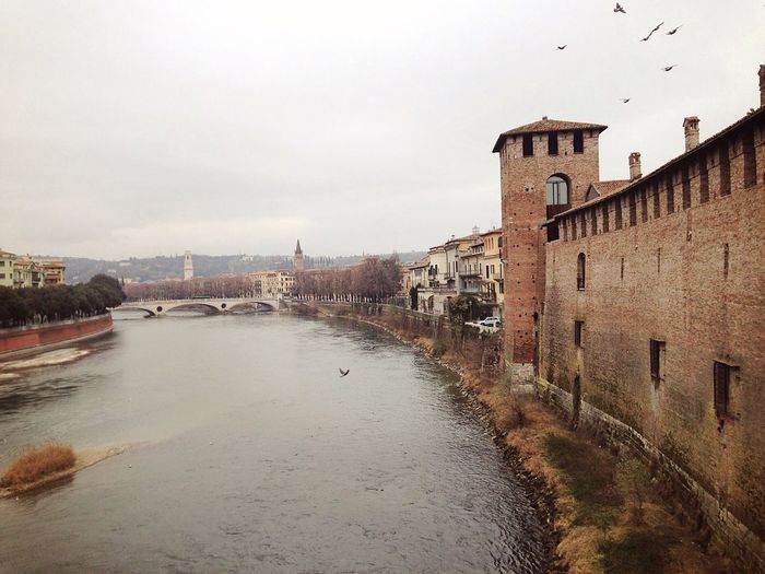 Castelvecchio Verona Verona Italy Veneto Italy Architecture Medieval Castle February 15 46/365 One Year Project 2017 Architecture Built Structure Building Exterior Water Sky Outdoors City No People Day Birds Wildlife