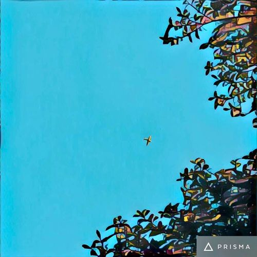 My air-plane art ✈️🛩🍃 planes Plane airplanes aircraft prisma flying Skies ✈️