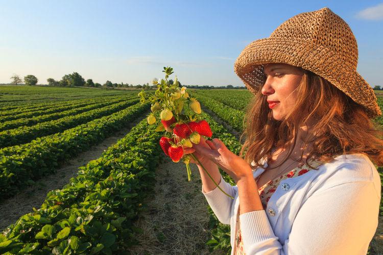 strawberry picking in Saturday Sunrise Landscape Morning Light Fruit Lifestyle Enjoying Life