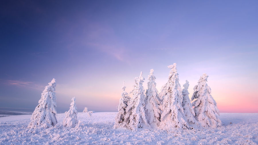 Erzgebirge EyeEmNewHere Beauty In Nature Cloud - Sky Cold Temperature Forest Frozen Landscape Mountain Nature No People Ore Mountains Outdoors Polar Climate Sky Snow Spruce Tree Sunlight Sunset Tranquil Scene Tranquility Tree White Color Winter