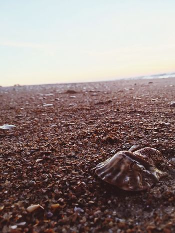 Washed ashore Beach Nature No People Outdoors Tranquility Close-up Sand Surface Level Beauty In Nature The Great Outdoors - 2017 EyeEm Awards The Great Outdoors - 2017 EyeEm Awards The Great Outdoors - 2017 EyeEm Awards Breathing Space Done That.