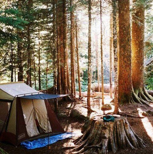 Life Wood Flowers People Night Лес палатка отдых