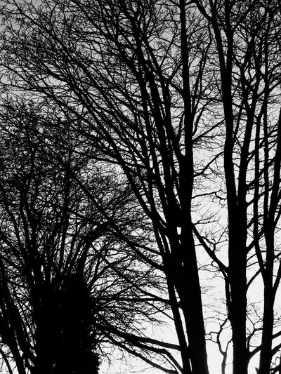 Tree whispering. Perspectives On Nature Idyllic Emotions Getting Inspired Capture The Moment Popular Photos The Week On EyeEm EyeEm Nature Lover EyeEmNewHere Backgrounds Rural Scene Blackandwhite Tree Branch Bare Tree Nature Low Angle View No People Beauty In Nature Tranquility Outdoors Day Tree Trunk Silhouette Growth Scenics Sky