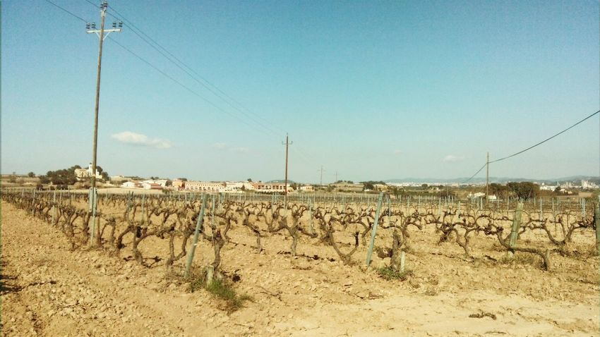 Landscape TOWNSCAPE Vineyards  Mobile Photography