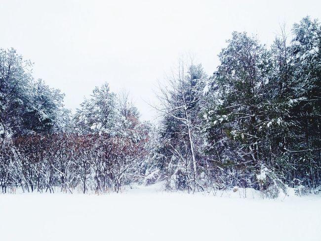 It's a winter wonderland Winter ADK My Backyard