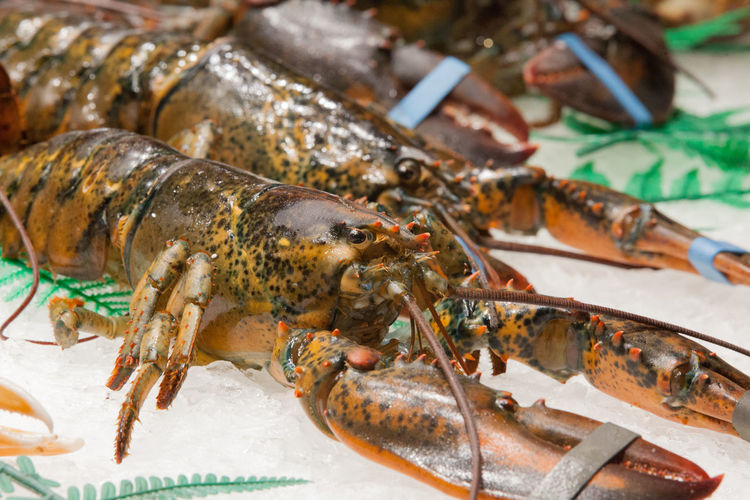 Lobster Captives Cruel Seafood Food And Drink Crustacean Group Of Animals Raw Food For Sale Market Freshness Animal Fish Food Lifestyles