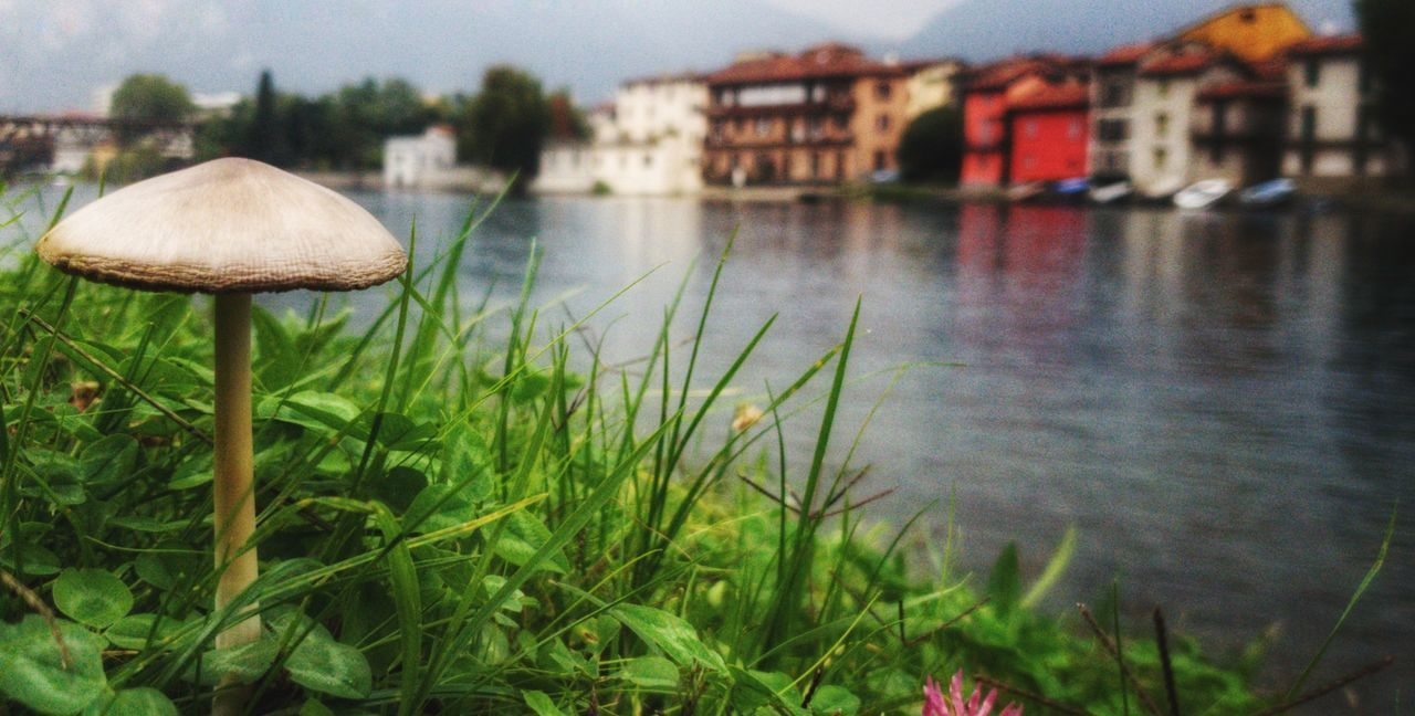 architecture, building exterior, plant, built structure, water, nature, growth, grass, no people, building, day, land, focus on foreground, outdoors, green color, close-up, river, fungus, mushroom, surface level